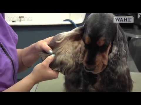 Grooming Guide - Cocker Spaniel - Salon/Pet Trim - Pro Groomer