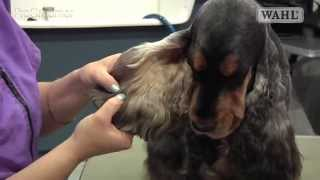 Grooming Guide - Cocker Spaniel - Salon/pet Trim - Pro Groomer