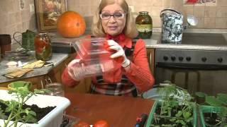 Лучки Пучки.  Серия 211.  Сеем семена томатов.