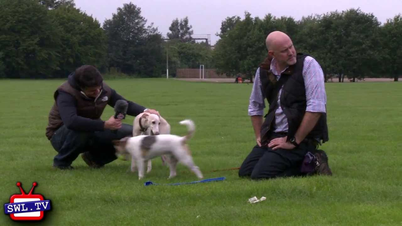 Dog Walker Northamptonshire West Hunsbury