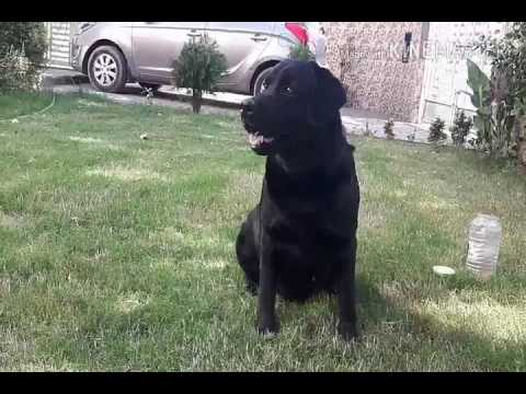 How to train dog basically at home in HINDI