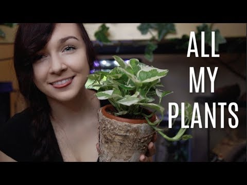 House Plant Tour! | All of My Plants