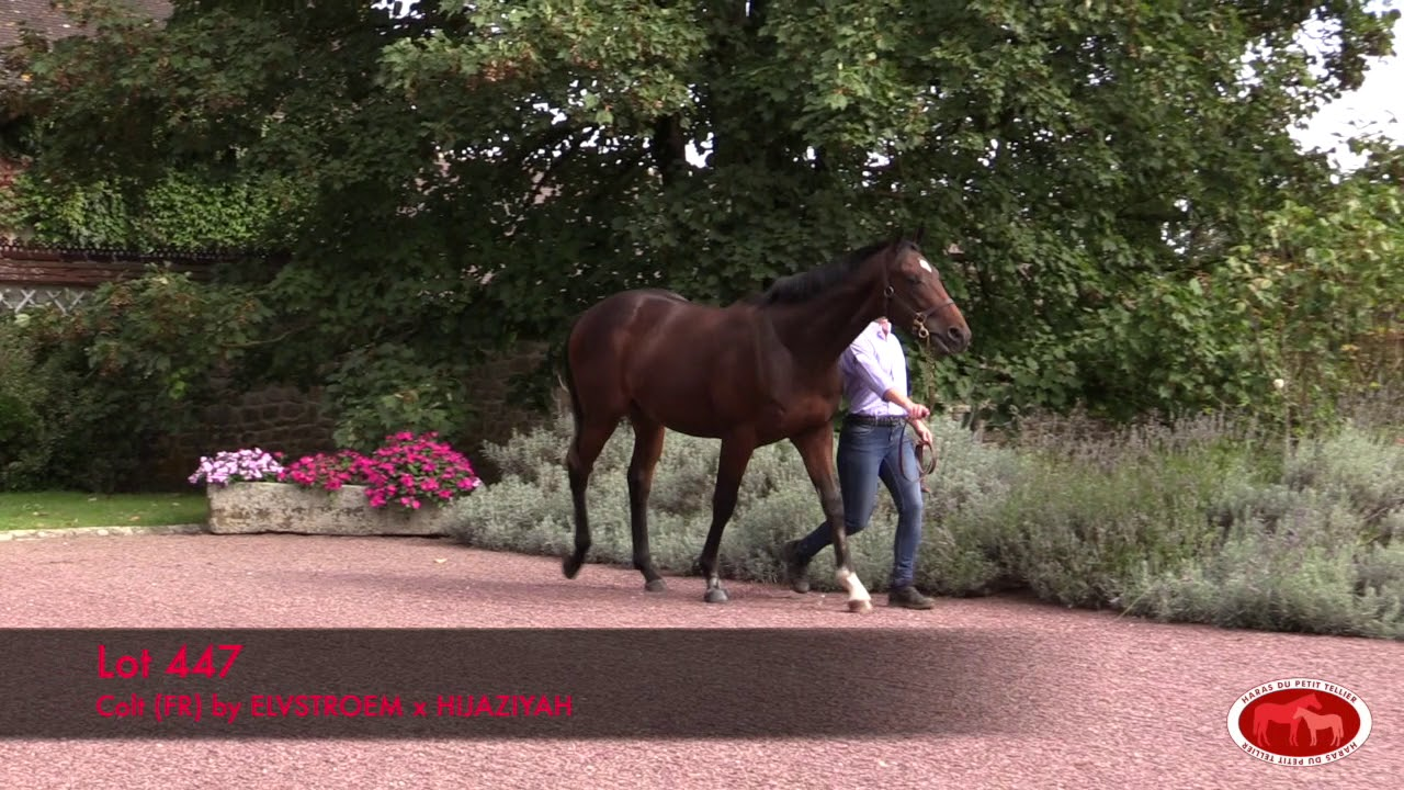 arqana octobre 2019 lot 447