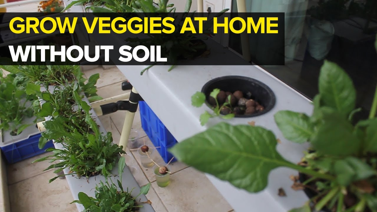 Hydroponics At Home Youtube