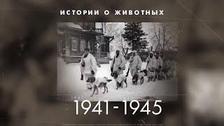 Как домашние животные сражались во времена Великой Отечественной войны.