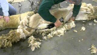 アルパカの毛刈り (ルカド、前半)
