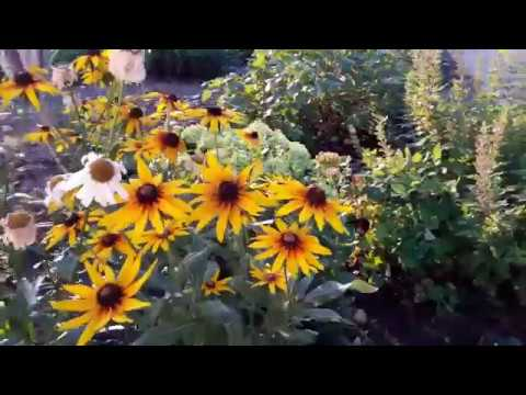 Мой любимый сад и огород своими руками видео