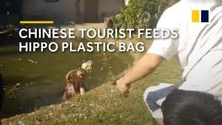 Chinese tourist feeds hippo plastic bag