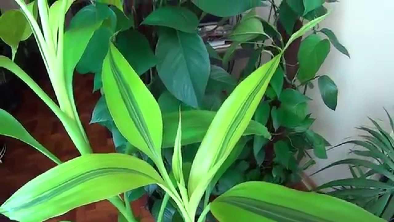 Jardineras Con Bambu #4: Maxresdefault.jpg
