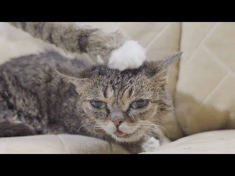 Lil BUB Pets Herself