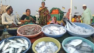 Mirkarwada Fish Market | रत्नागिरी चा Wholesale Fish Market | Biggest Fish Market in Ratnagiri