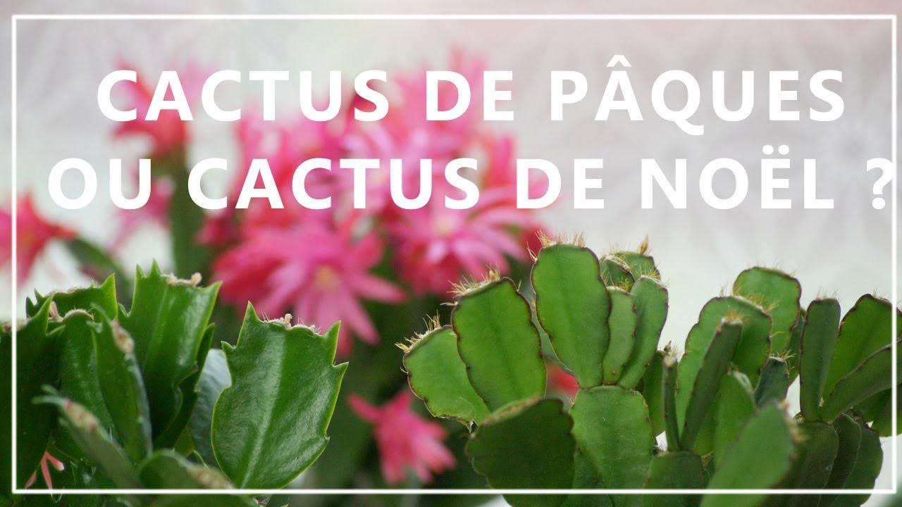 Image Ou Photo De Noel.Cactus De Noel Ou Cactus De Paques Comment Faire La