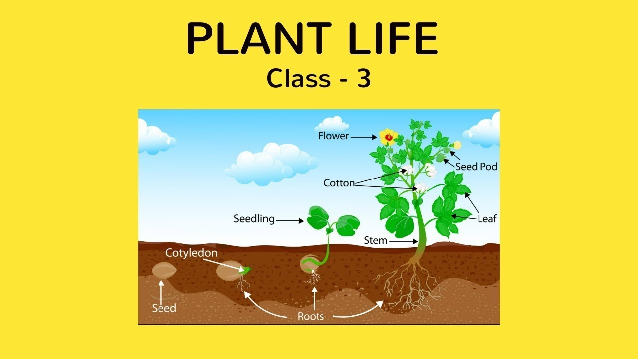 hight resolution of Class 3 - EVS - Plant life   FREE Tutorial - YouTube