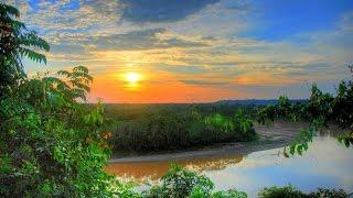 Амазония - удивительный мир дикой природы
