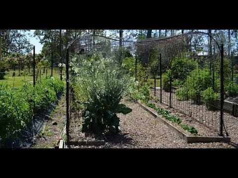 Low Cost Tunnel Trellis To Grow Climbing Vegetables