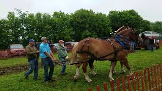 cottage grove wisconsin horse pull 2019