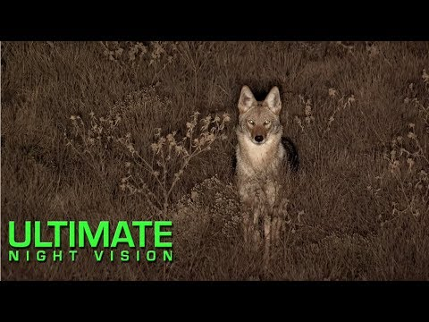 Predator Hunting with Thermal... and Lights?!?  *Mind = Blown*