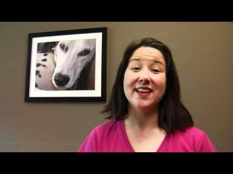 Stop Barking! - Dog Behavior