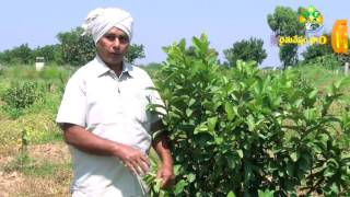 4 ACRES 32 LAKHS (Taiwan GUAVA  Cultivation)