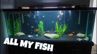 TRANSFERRING ALL My FISH into the TANK!!!