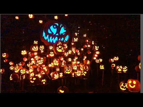 5,000 Glowing Pumpkins AT MN Zoo