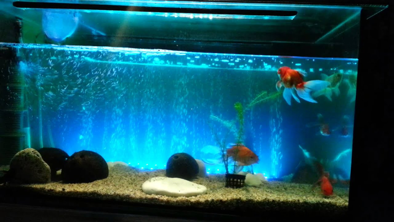 Fish tank led light bar 62cm 6 5w 24 led bubble aquarium for Fish tank lighting