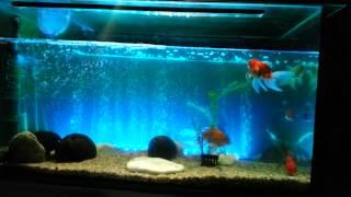 fish tank led light bar 62cm 6 5w 24 led bubble aquarium light 120 degree rgb 16colors ip68 remote c
