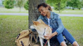 Loving African American girl student is stroking lovable shiba inu dog, caressing the animal sitting
