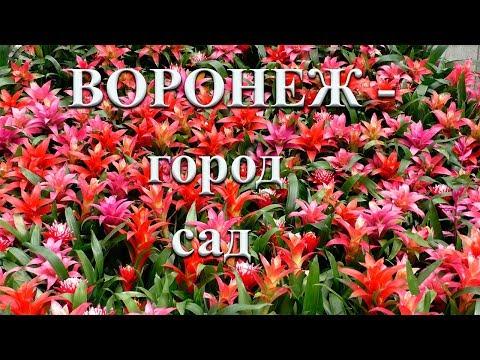 Воронеж  - город сад!!!!! 2019г.