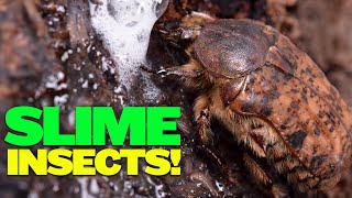 Incredible Slime-Eating Insects: Slime Flux BioBlitz