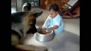 funny video clips 2014 2015 funny german shepherd videos compilation