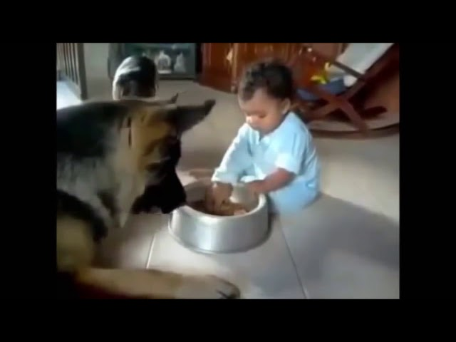 Funny video clips (2014 - 2015) - Funny German Shepherd Videos Compilation