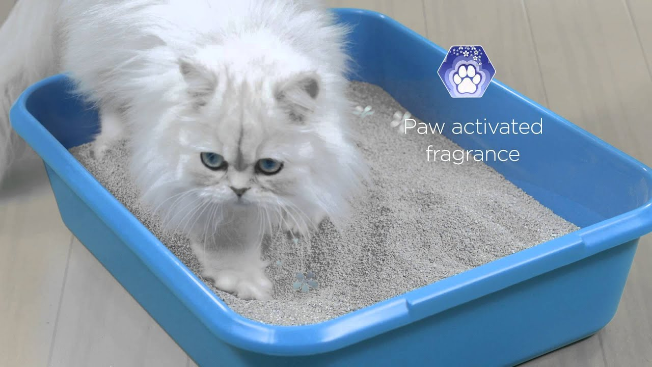 Best Cat Litter for Odor Control 2019: Top 8 You Should Invest In