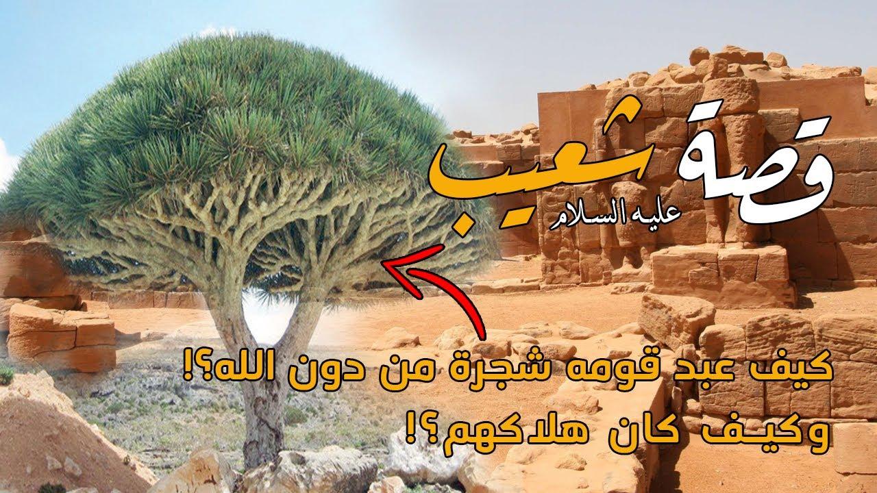 قصة النبي شعيب مع قوم مدين !