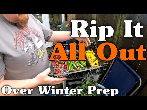 Clearing out the Greenhouse | Picking Chillis | Overwintering Again