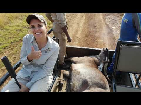 Waterbuck Bull Hunt South Africa - April 2017