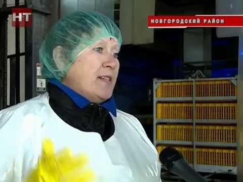 Птицефабрика Новгородская в деревне Божонка возобновила работу