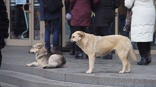 Житомирянку покусала безпритульна собака, яка може бути скаженою
