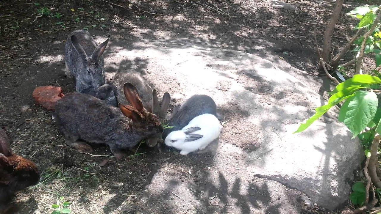 Кролики и конопля лигализуют ли марихуану