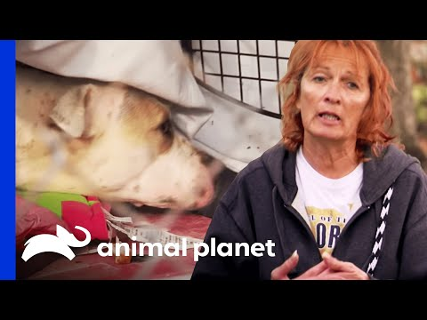 Rescuing a Mama Dog and Newborn Puppies | Pit Bulls and Parolees