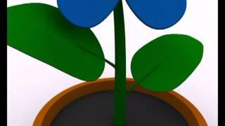 InfoPlus Biologia - Rośliny Transgeniczne - Zadanie