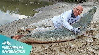 Видео о рыбалке на панцирную щуку в Техасе(http://royal-safari.com/blog/fishing/fishing-reports/otchet-o-ryibalke-v-tehase-20-23-oktyabrya-2013/#6 Рыбалка на Миссисипи отличается от многих рыбалок., 2013-12-10T18:25:12.000Z)