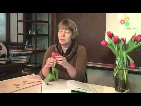 Морфология растений. Работа с определителем растений (Е.Э.Северова)