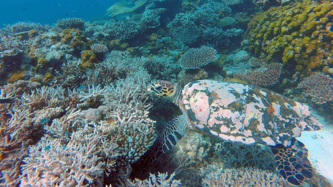 Подводная охота #21 плавание с черепахами