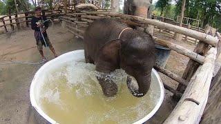 Baby Elephant Gets a Bath || ViralHog