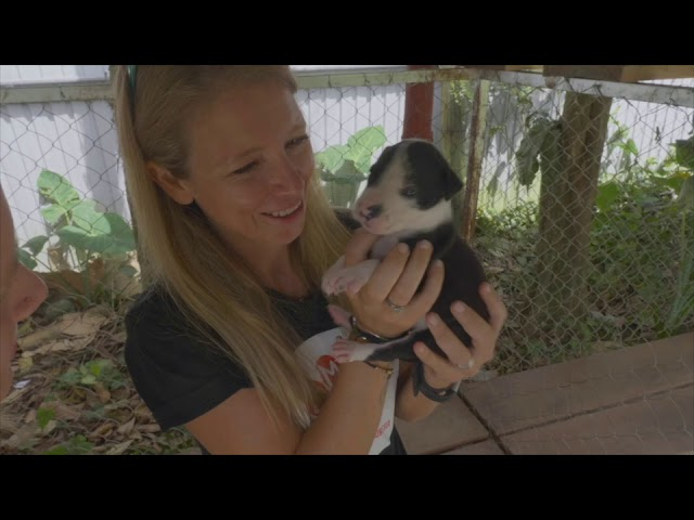 Change For Animals Foundation video channel