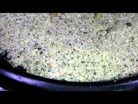 Howto grow weed-kill all fungus gnats & whiteflies