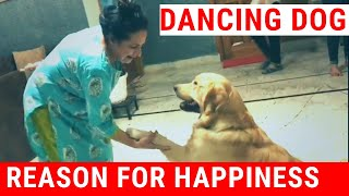 Happy Client || Best Dog Companion ||Golden Retriver Healthy Dog || Client Review ||Baadal Bhandaari