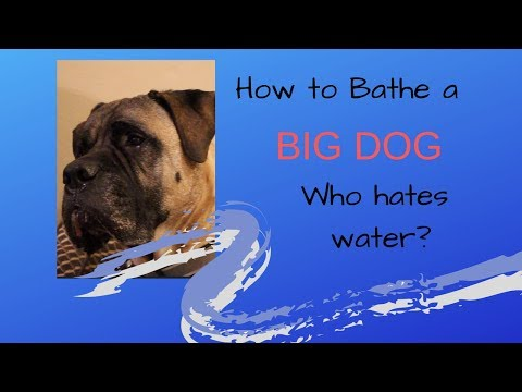 How To Bathe A BIG Dog Who Hates Water!