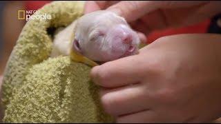 Weterynarze pomagali szczeniaczkom złapać pierwszy oddech [Weterynarze w krainie kangurów]